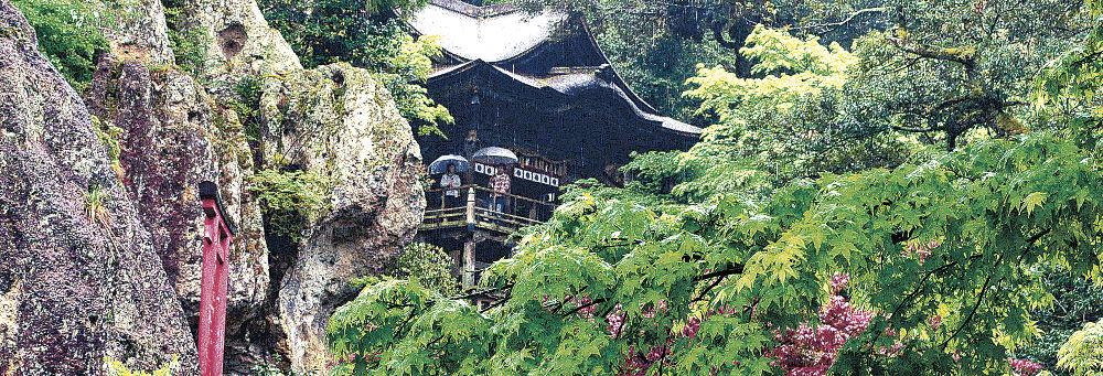 雨にぬれ、鮮やかに境内を彩る新緑=24日、小松市の那谷寺