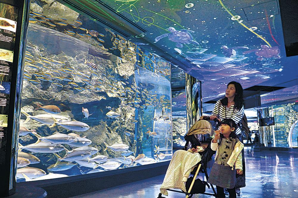 新しい回遊水槽を眺める来館者=七尾市ののとじま水族館