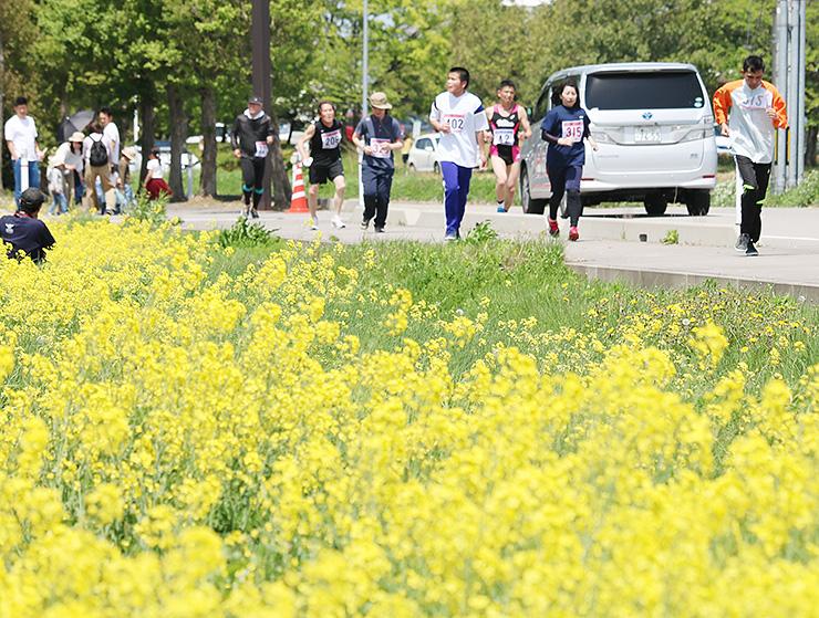 菜の花畑を横目に走るランナーたち