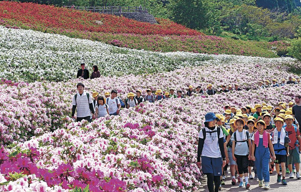 ツツジが咲き誇る中を巡る児童=金沢市の大乗寺丘陵公園