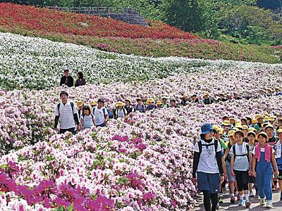 ツツジ見頃、笑顔の花咲く 金沢の大乗寺丘陵公園