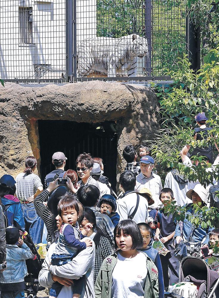 ホワイトタイガーなどを見て回る家族連れ=能美市のいしかわ動物園