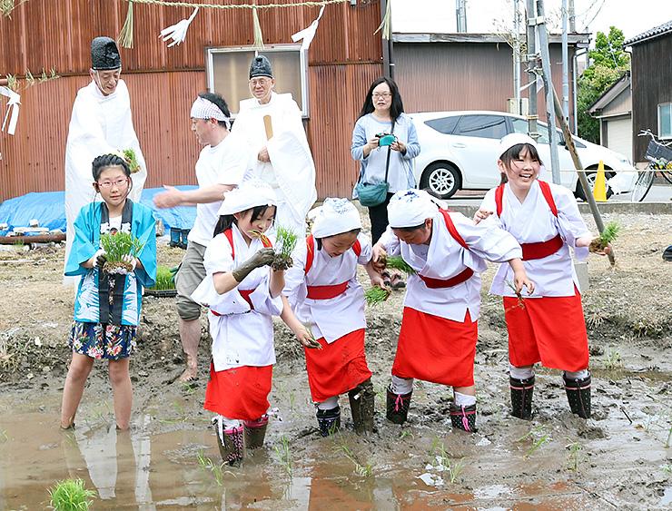 早乙女の衣装を着て苗を植える児童