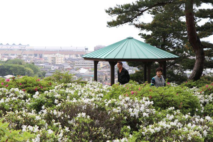 約3500株のツツジの花が咲き誇る月華山かねこつつじ園=8日、糸魚川市一ノ宮