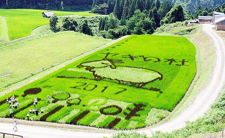 稲の色の違いを利用してヤギの姿などが浮かび上がった昨年の「稲作アート」