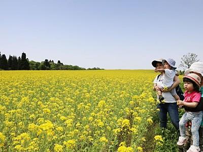 高原は春らんまん 小千谷・山本山の菜の花畑