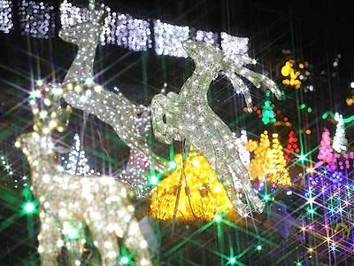 夜に彩り添える10万球の輝き 根羽の観光施設