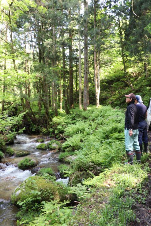 いたやま春の夢まつりでウオーキングに使う林道を見回る住民=新発田市
