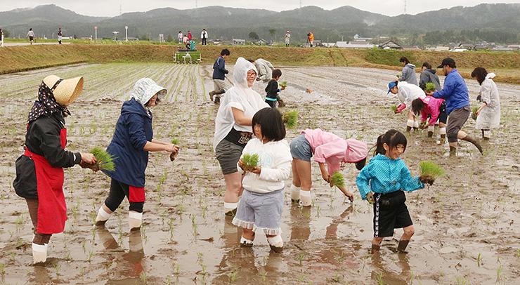 和気あいあいと苗を植える大阪からの参加者=小矢部市