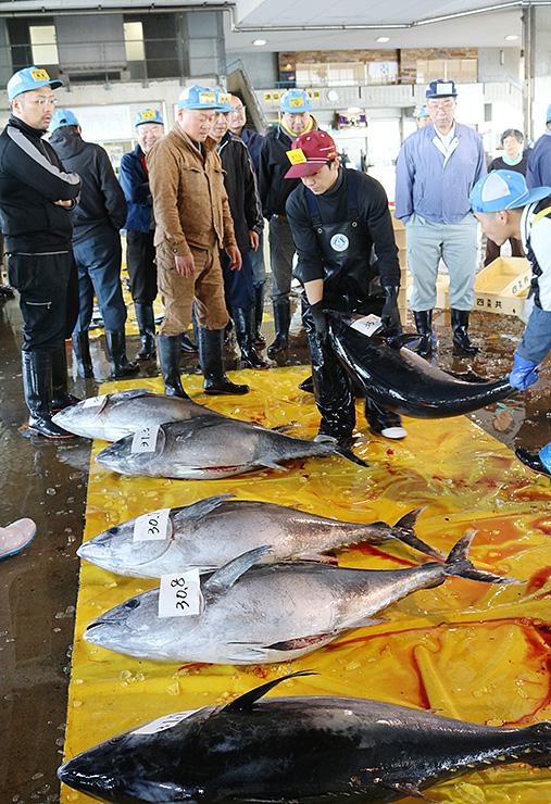 競りにかけられるクロマグロ=氷見魚市場