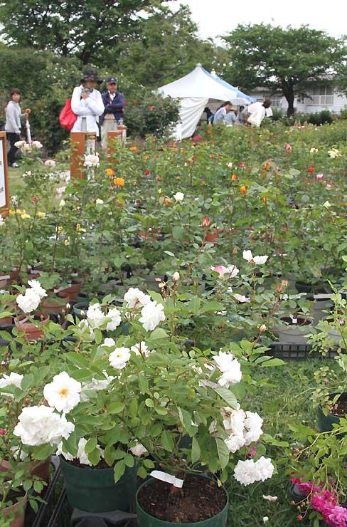 「バラまつり」開幕を前にプレオープンでにぎわう中野市の一本木公園