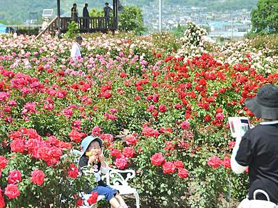 中野×坂城、バラ競演 まつり開幕でにぎわい