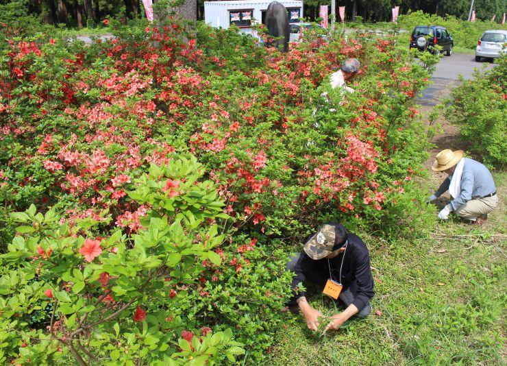 つつじ原公園で花の手入れをする人たち=29日、十日町市伊達