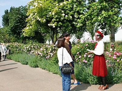 豊かな彩色バラ一面に 英国庭園でフラワーフェス 見附