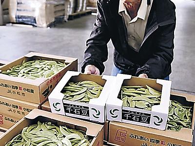 小松市で千石豆の出荷本格化