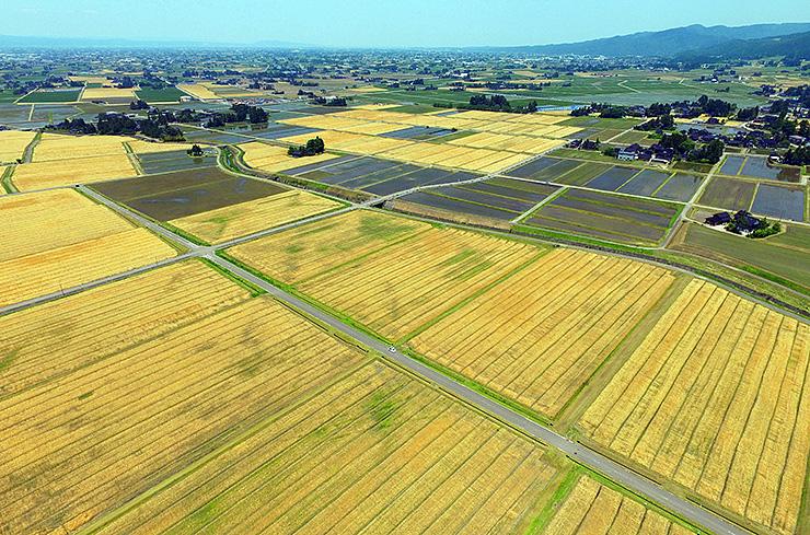 砺波平野に広がる麦畑=南砺市蛇喰、小型無人機ドローンで撮影