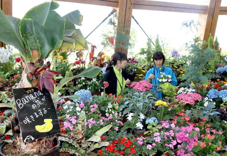 市民により親しんでもらおうとデザインを一新した花壇で作業するスタッフ=新潟市中央区