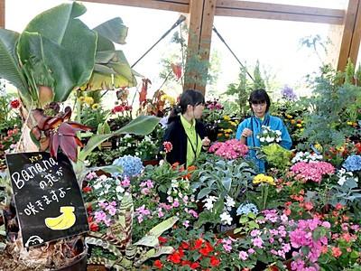 いくとぴあ 花壇を一新、英国風情に 新潟・中央区