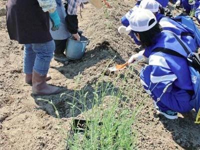 ラベンダー再生へ一歩 畑耕し中学生ら植栽 村上荒川地区