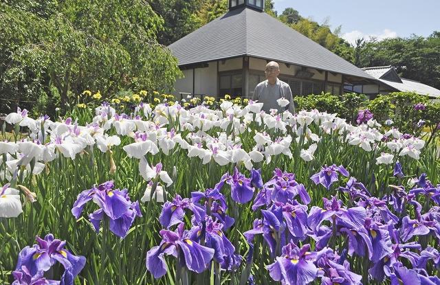 色とりどりに咲き誇り、見頃を迎えているハナショウブ=6月7日、福井県小浜市浅間の常高寺