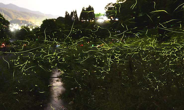 辰野町の松尾峡にある「ほたる童謡公園」で幻想的な光を放ちながら乱舞するゲンジボタル=7日午後8時4分から49分まで撮影した21枚を重ねた
