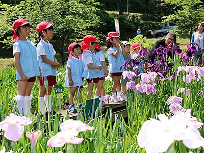 花しょうぶ祭り始まる 砺波・県民公園頼成の森