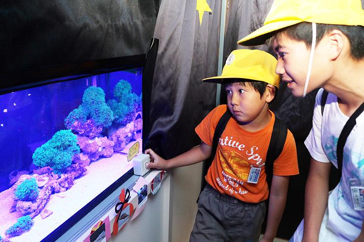 蛍光を発するサンゴに見入る子どもたち