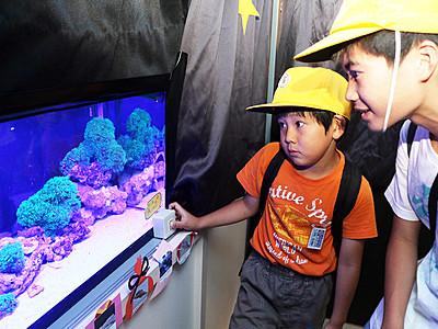 """""""海の星""""に願いを 魚津水族館で七夕展"""