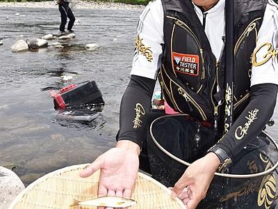 アユの成育「順調」 九頭竜川で解禁前に試し釣り