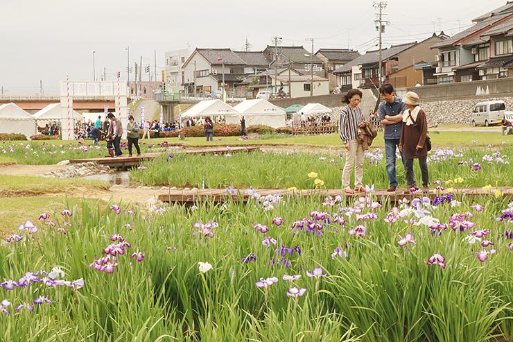 涼しげな花を眺める来場者=小矢部河川公園