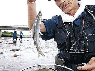 犀川のアユ成育順調 金沢漁協が試し釣り