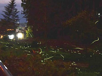 ホタルの舞「今までで一番」 南箕輪で「祭り」開幕