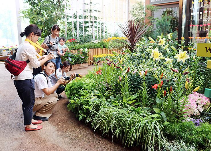 楽しげに花の写真を撮る来場者=チューリップ四季彩館