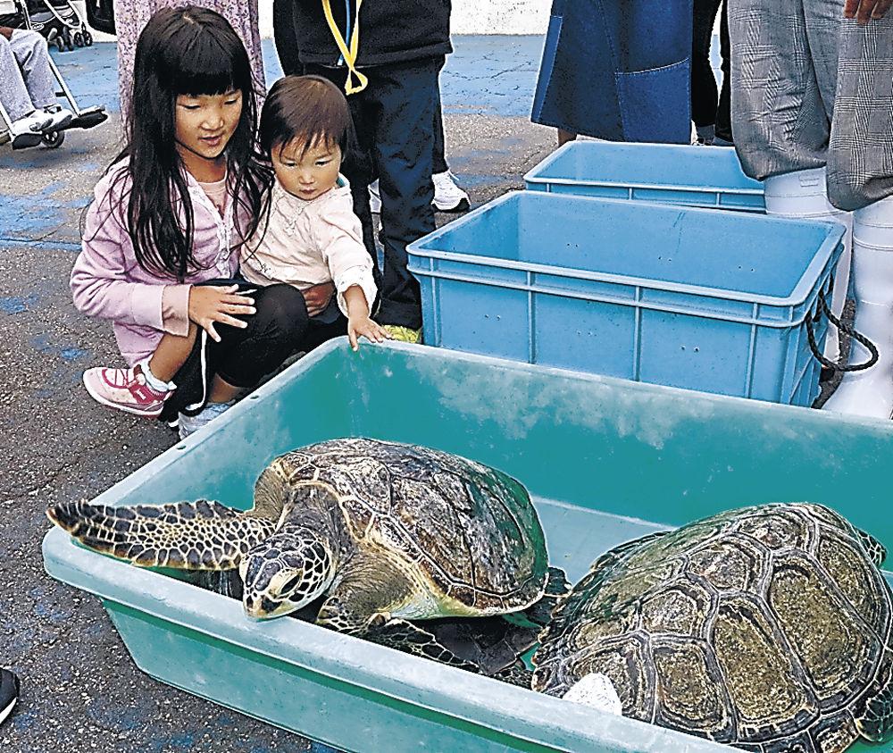 ウミガメを触る来館者=七尾市ののとじま水族館