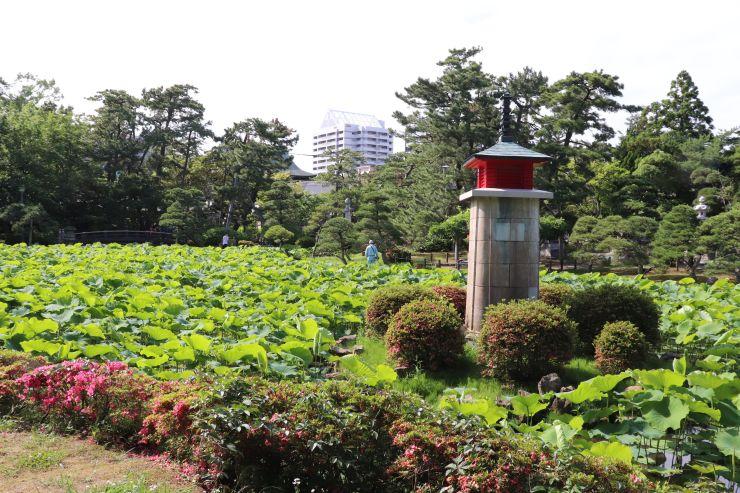 白山公園の開設当初からある蓮池=新潟市中央区