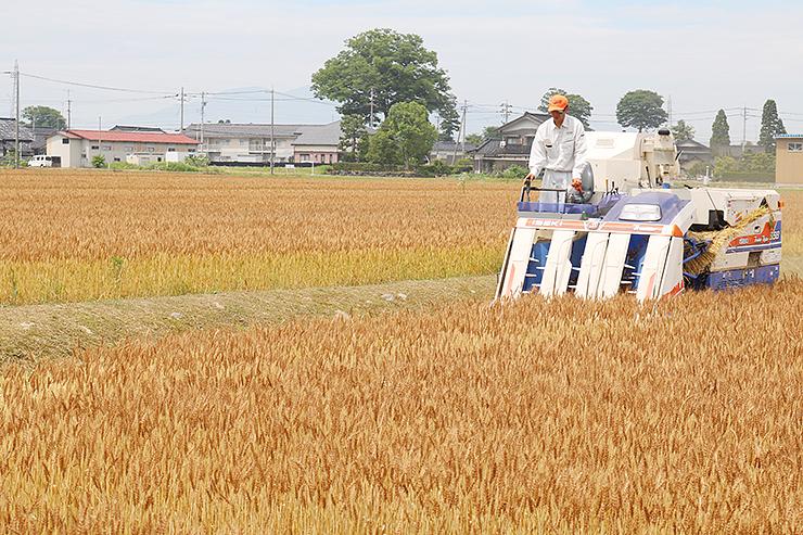 小麦の収穫作業を行う組合員