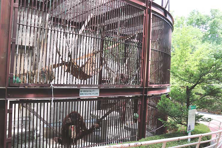 茶臼山動物園のオランウータンが暮らすおり。園内の林の中で生活できるようにする計画が進んでいる=19日