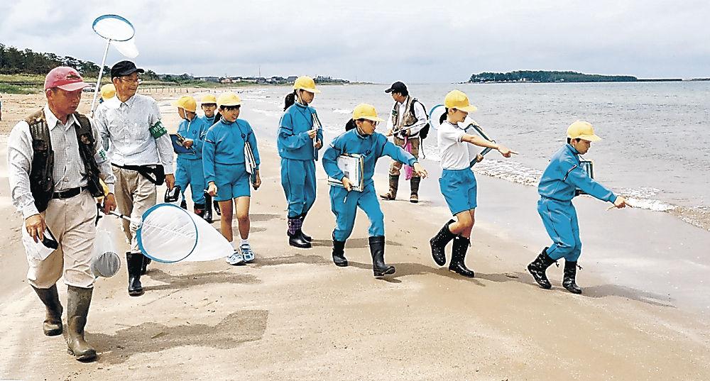 イカリモンハンミョウを観察する児童=羽咋市の柴垣海岸