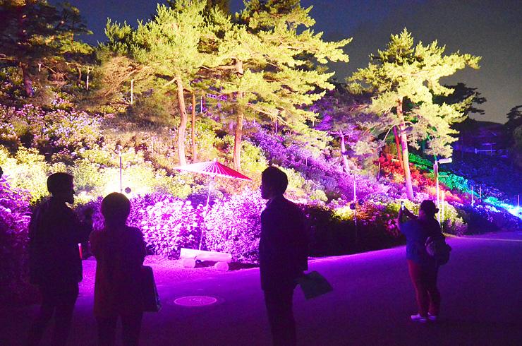 LEDで7色にライトアップされたアジサイ=太閤山ランド