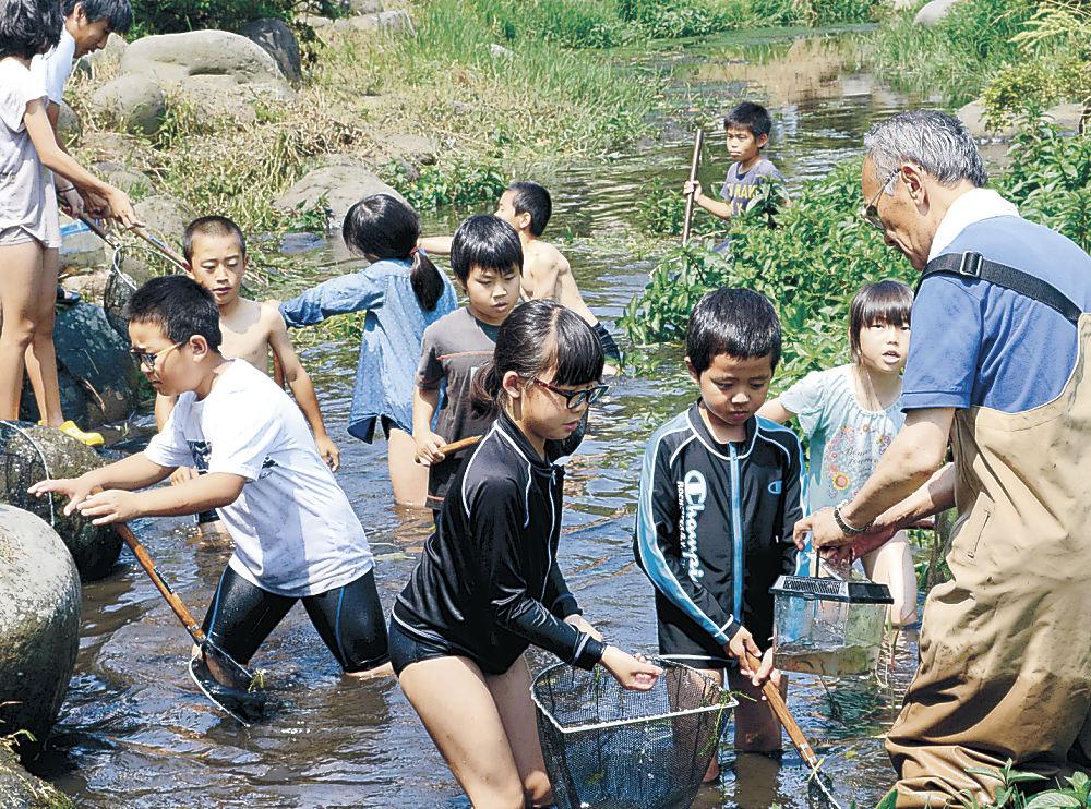 川の中で生き物を探す児童=白山市美川和波町の安産川親水公園