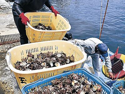 国文化財の誇り胸に潜る 輪島の海女、アワビ・サザエ漁解禁