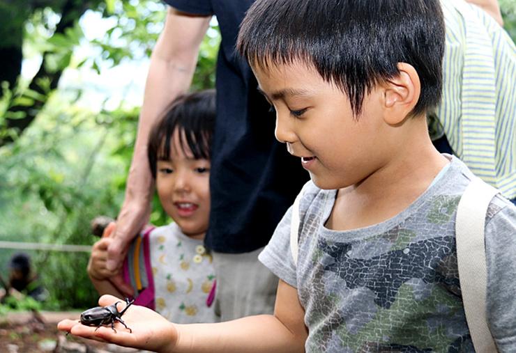 カブトムシを手のひらに載せる子ども