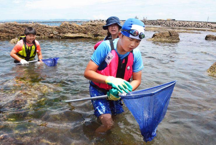岩場で海の生き物を探す参加者=8日、柏崎市番神