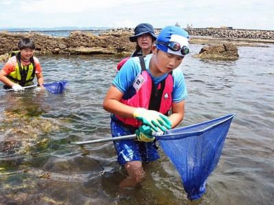 柏崎「番神自然水族館」始まる 海の生き物捕まえ観察