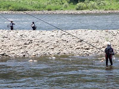 アユ友釣り腕が鳴る 魚野川で待望の解禁 魚沼