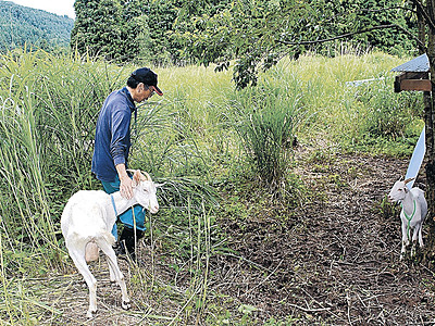 放牧ヤギが「除草」、耕作放棄地を再生 七尾市中島町釶打地区で試行