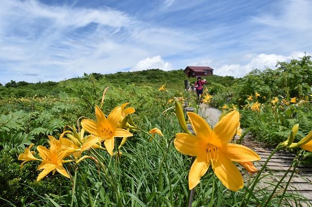 青空に映えるニッコウキスゲ=7月11日、福井県大野市の赤兎山
