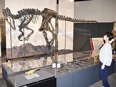 国内初公開の化石など79点 勝山・県立恐竜博で特別展