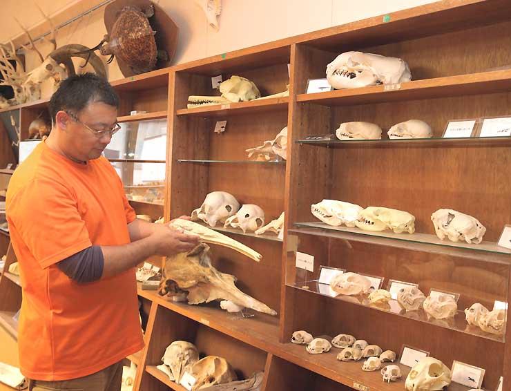 遠藤教授が講演で生態を紹介するオオアリクイの骨格標本を手にする戸隠地質化石博物館専門員