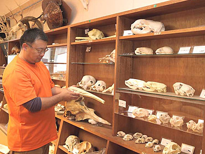 戸隠地質化石博物館10周年 「遺体科学」提唱者講演など企画